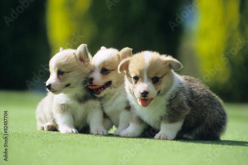 仲良しの子犬たち、Puppies of a good friend