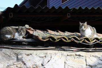 Chats qui font une petite sieste