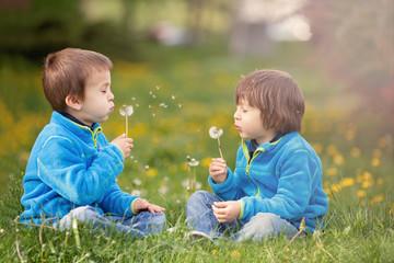 Happy cute caucasian boys, blowing dandelion outdoors in spring