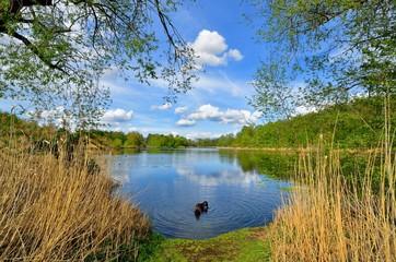 Hund beim Wassertrinken im See