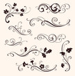 Set of calligraphic floral elements - 82495777