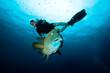 ������, ������: Napoleon Fish and Diver