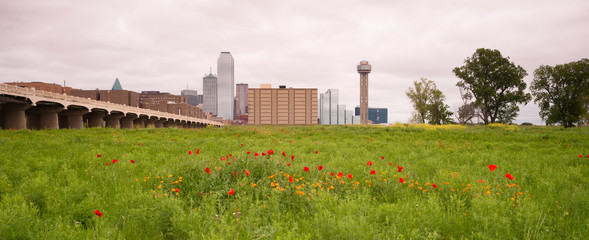 Dallas Texas City Skyline Metro Downtown Trinity River Wildflowe
