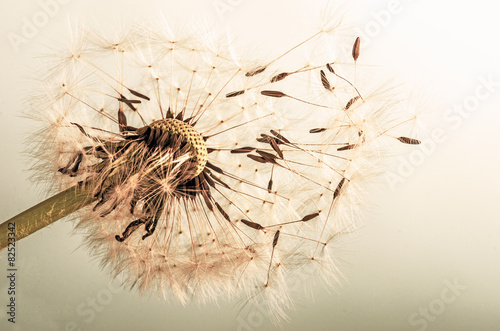 Dandelion clock :)