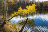 Autumn, birch with yellow leaves over a lake - 82529311