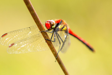 Dragonfly standing on dry leaf
