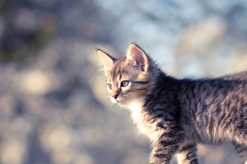 Portrait of a beautiful little kitten on the nature
