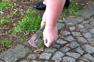 Gartenweg Pflastersteine pflegen