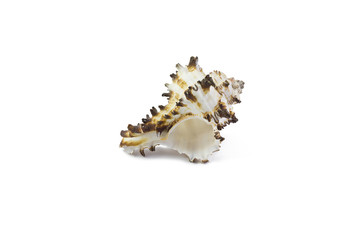 shell on a white background