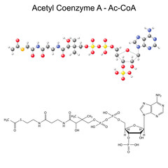 Structural chemical formula and model of Acetyl Coenzyme-A