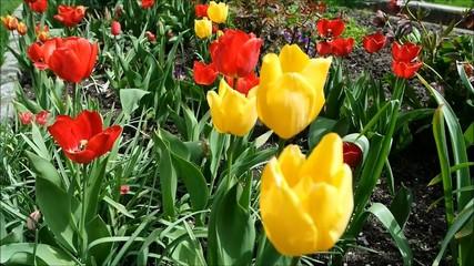 Tulpenmix im Frühling