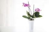 Fototapety orchidea in vaso