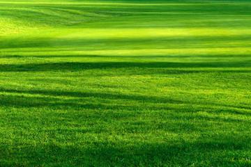 Licht und Schatten auf schönem Rasen