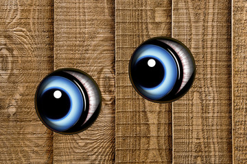 Pair of blue eyes peeping through wooden fence in closeup