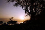 Early Morning Sunrise through the trees over an island and ocean