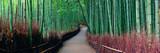 Fototapeta Bambus - Bamboo Grove © rabbit75_fot