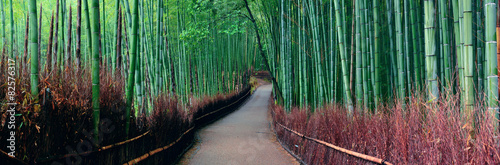 Staande foto Kyoto Bamboo Grove
