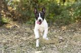 Naklejka Szczęśliwi szczeniak biegnie