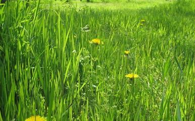 Весеннее разнотравье на  поляне в лесу
