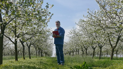 Agronomist, farmer examine blooming cherry  orchard writing data