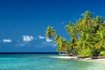 einsamer Strand mit Palmen auf den Malediven