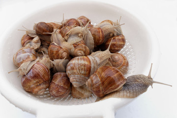 groupe d' escargots