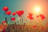 Fototapety Sunset over poppies field