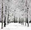 Winter birch trees in spring april day