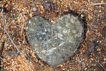 heart in the pine forest