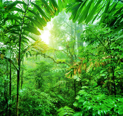 Fresh green rainforest