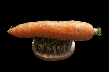 Karotte auf der Bürste