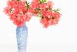 Coral pink azalea in blue vase