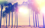 Fototapety 3D palm trees and ocean with vintage effect