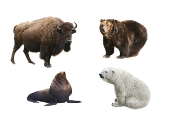 Mammals of Russia on a white background isolated