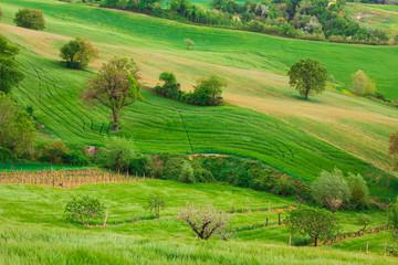 Paesaggio collinare rurale nella regione Marche, Italia