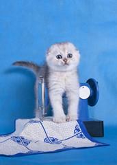 котенок на швейной машинке