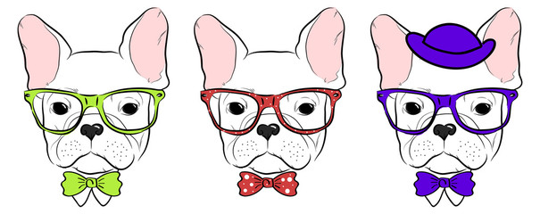 set of cute bulldog muzzles in glasses with bow tie and hat