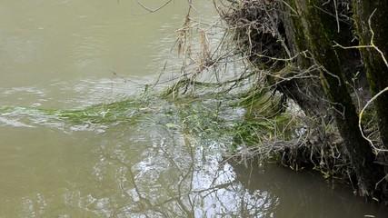 Fluss bei Oberglatt