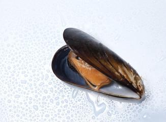 mejillon marisco 2
