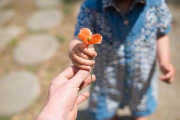ヒナゲシの花を手渡す親子の手