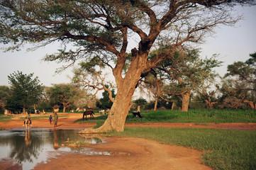 Paisaje africano