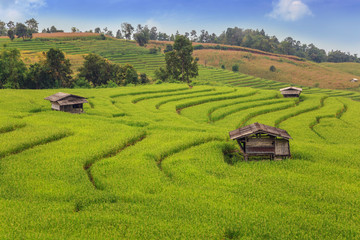 The rice fields in the country of Thailand
