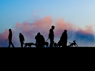 silhouettes of people with they dogs on playground