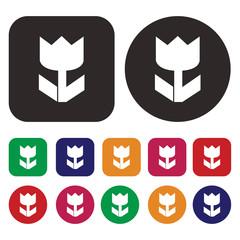 Macro icon /  Flower icon