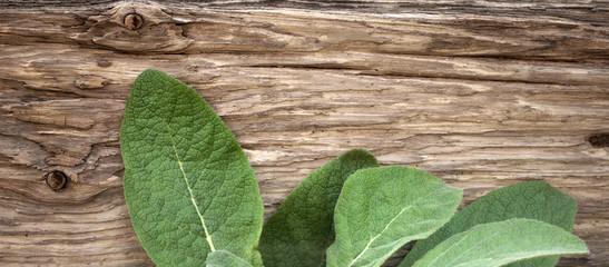 Blätter von Königskerze vor altem Treibholz Brett 1