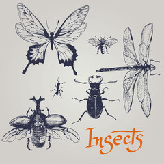 Set of various insects. Vector.