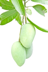 Raw mangoes and green leaves isolated on white