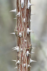 Prickles on a plant