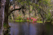 Lush South Carolina Swamp Garden