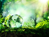 Fototapety crystal globe on moss in a forest - environment concept